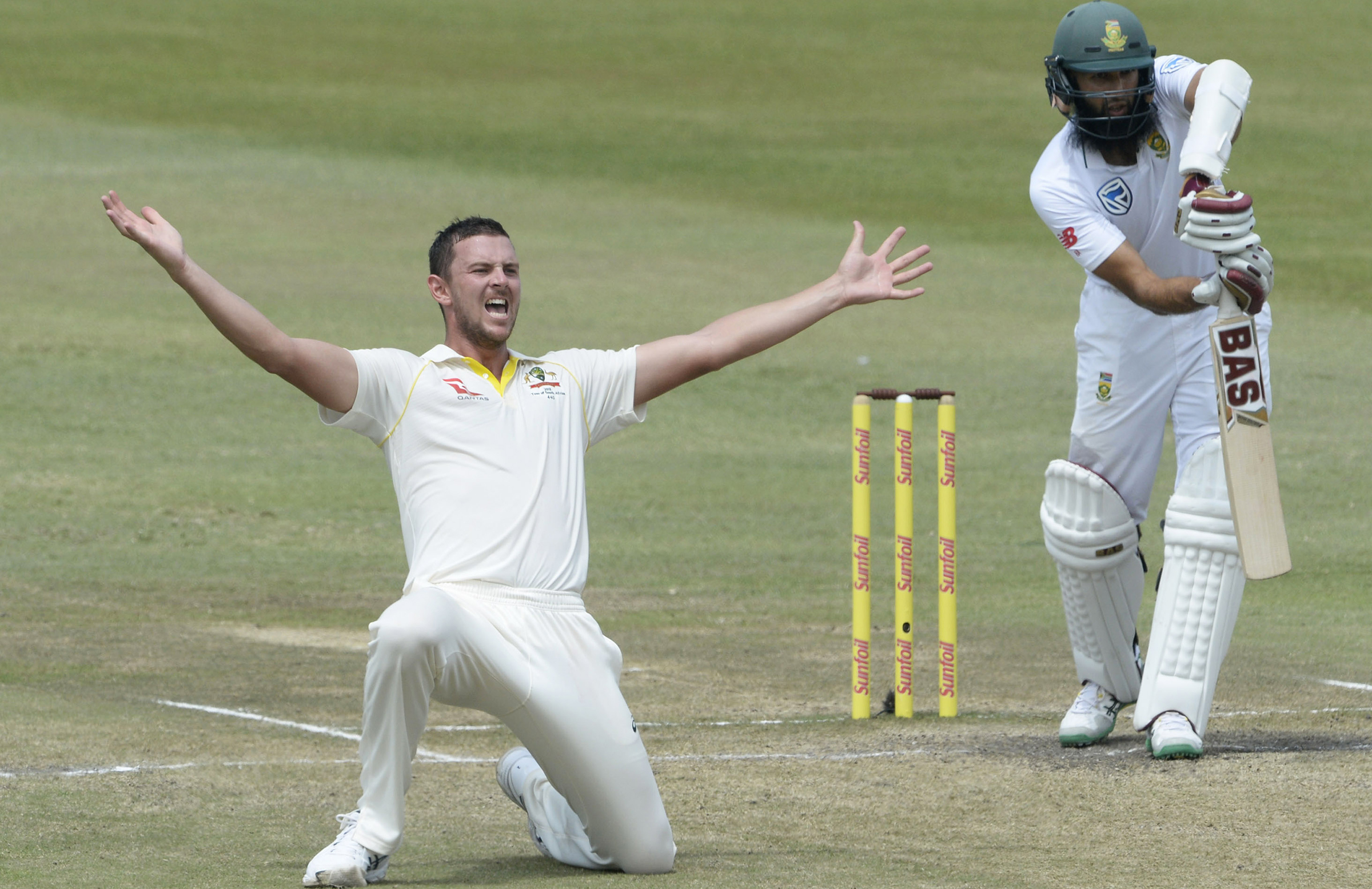 Hazlewood removes Amla for the sixth time in seven innings // Getty